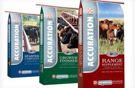 accuration Cattle