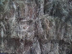 c hay close up 300x225 We Have Coastal Hay!