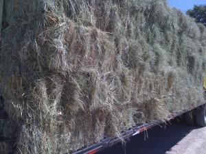 c hay on truck 300x225 We Have Coastal Hay!