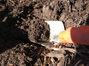 soil1 e1364163845676 300x225 March 28 : Featured Item of the Week : Soil Testing