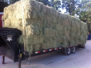Hay 6 27 13 300x224 October 7   Featured Item of the Week
