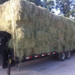 Hay 6 27 13 150x150 October Featured Item of the Week