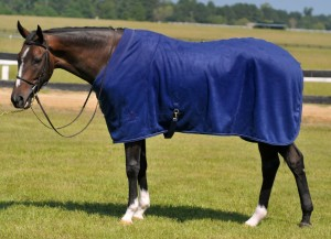 horse in blanket 300x217 November 10 : Featured Item of the Week