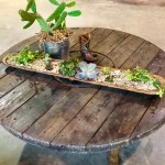 succulents on round table 150x150 Caring for Succulents