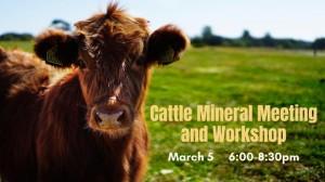 cattle worshop 300x168 Cattle Mineral Meeting & Workshop
